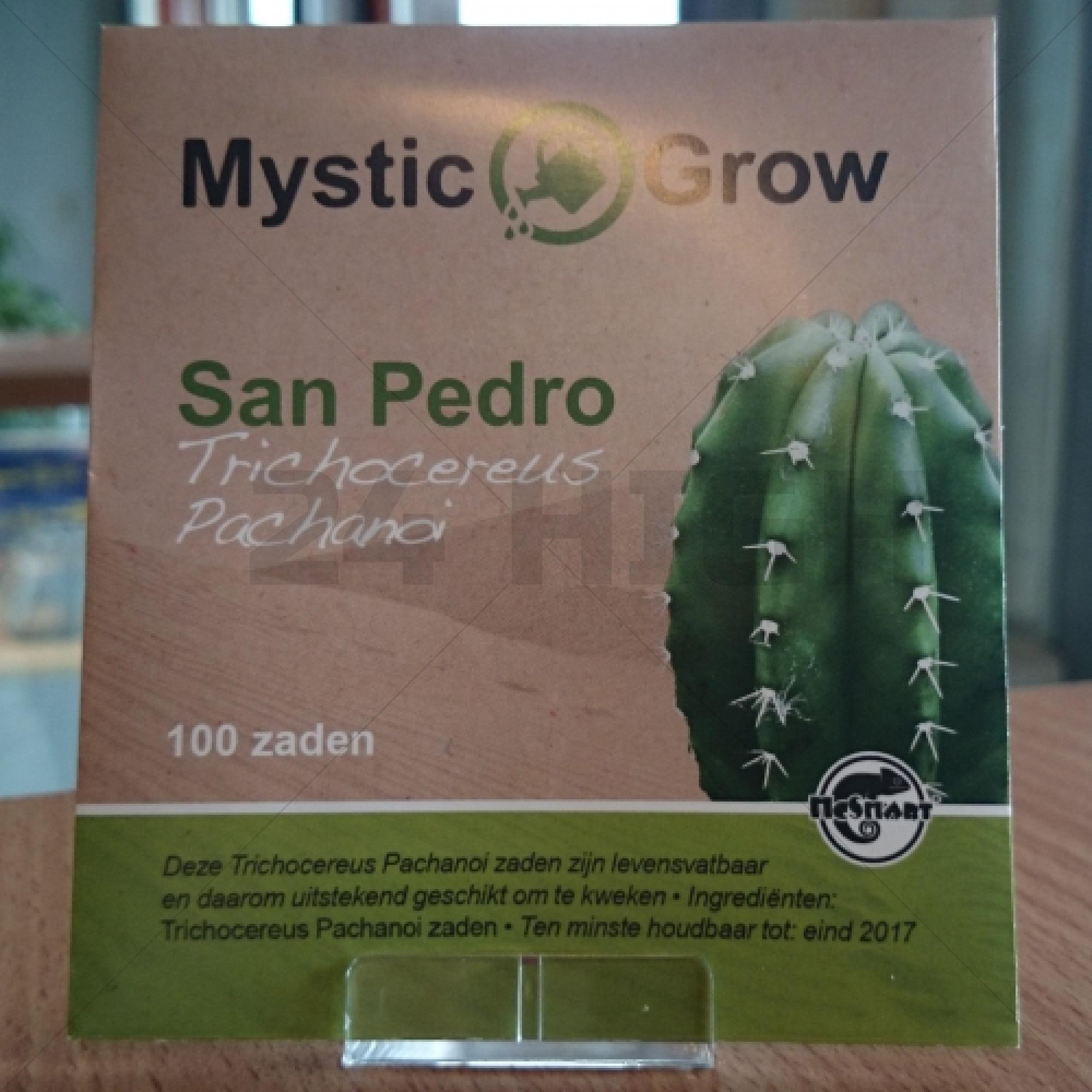 San Pedro semillas (Trichocereus Pachanoi)