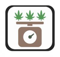 Semillas de Marihuana con THC Alto