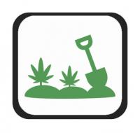 Semillas para Cultivo Exterior