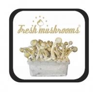 Kits de Cultivo Fresh Mushrooms de Hongos Psilocybe