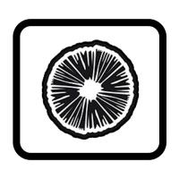 Sellos de Esporas